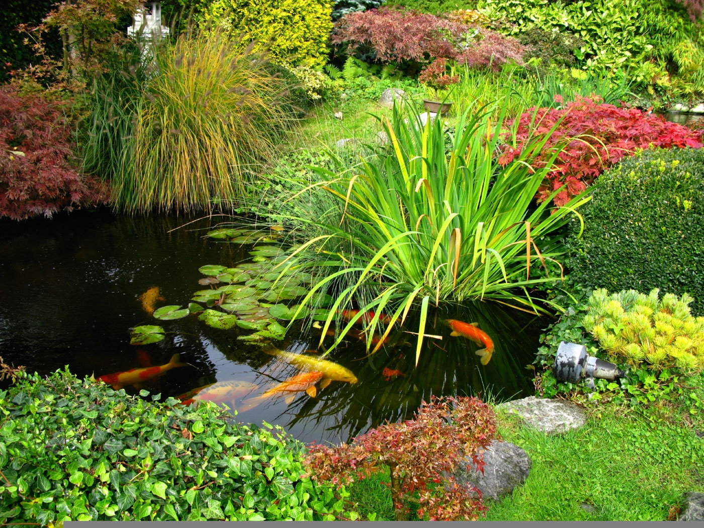 Koi garden pond design and winter care for Koi pond upkeep