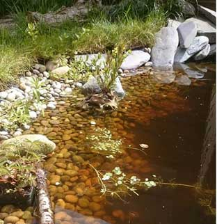 Wildlife friendly garden pond with pebbles covering the pond liner to give it that natural loo.