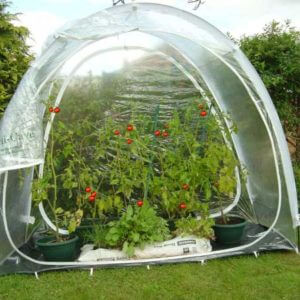 Modular greenhouse Culti-Cave grow tent with the option of joining two tents for extended growing space