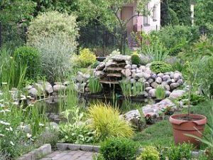 Established garden pond to inspire your own pond build plans.
