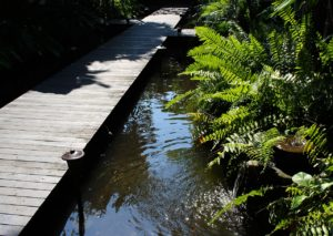 Pond with wooden bridge going across and bordered by ferns