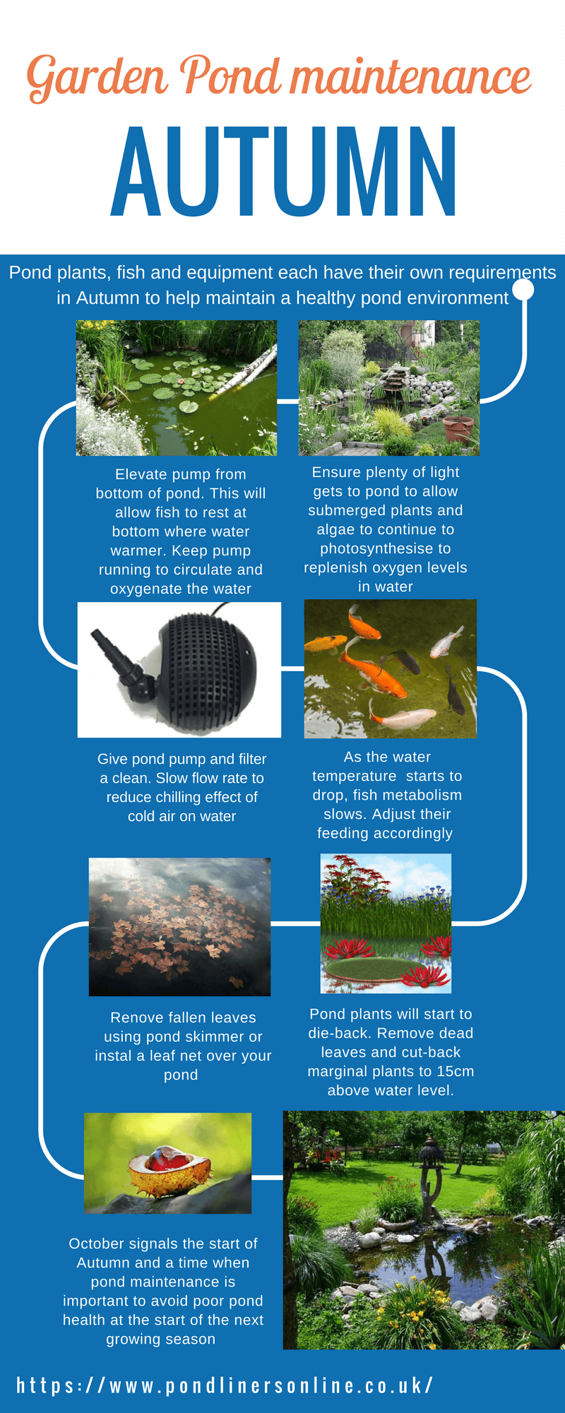 Autumn garden pond maintenance tips on this infographic