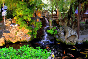Koi fish pond with waterfall to maintain healthy levels of oxygen in water